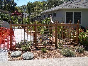 300x225UID-1-1458751996Wood lattice enclosure